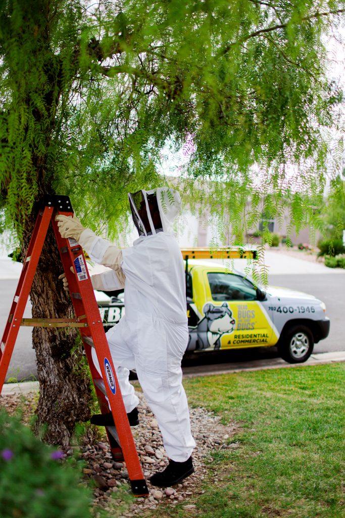 Tree Inspection